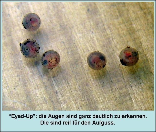 eyed_up